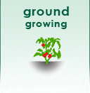 Ground Growing